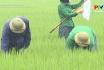 Chủ động phòng trừ bệnh đạo ôn hại lúa