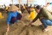 Công nghệ và đời sống - Nệm lót sinh học giải pháp an toàn trong chăn nuôi