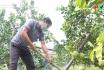Thanh Ba thực hiện khâu đột phá trong nông nghiệp