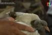 Thoát nghèo từ mô hình nuôi chim bồ câu