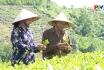 Phát triển kinh tế ở vùng đồng bào dân tộc thiểu số