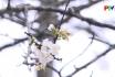 Đến với bài thơ hay - Gái Xuân