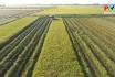 Hiệu quả từ phong trào nông dân sản xuất kinh doanh giỏi