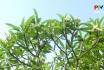 Khoảnh khắc cuộc sống: Hoa sứ