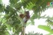 Chuyên canh cây ăn quả