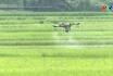 Nông nghiệp Phú Thọ - Hiệu quả UDQL dịch hại tổng hợp trên cây trồng