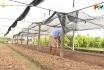 Sản xuất rau vụ Đông
