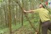 Trồng rừng thâm canh, nâng cao hiệu quả kinh tế