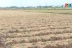 Nông nghiệp Phú Thọ: Đẩy mạnh sản xuất vụ đông