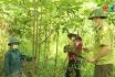 Chăm sóc rừng trồng sản xuất