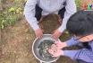 Hướng dẫn kỹ thuật chọn giống và thả cá giống