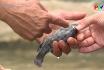 Quản lý và chăm sóc cá lồng mùa mưa lũ