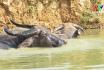 Nông thôn mới Phú Thọ - Chống nóng cho đàn vật nuôi