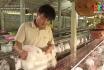 Nông thôn mới Phú Thọ - Tăng giá trị nông sản từ liên kết sản xuất