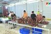 Nông thôn mới Phú Thọ - Xây dựng chuỗi cung ứng nông lâm thủy sản an toàn