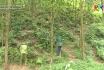 Chăm sóc rừng trồng gỗ lớn