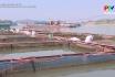 Xử lý ao nuôi thủy sản sau thu hoạch