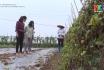Nông thôn mới Phú Thọ: Phát huy vai trò tổ nhóm liên kết
