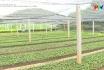 Nông thôn mới Phú Thọ - Quản lý sản xuất và kinh doanh giống cây trồng