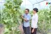 Nông thôn mới Phú Thọ: Nâng cao chất lượng nông sản sạch