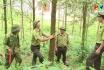 Xây dựng Nông thôn mới từ kinh tế đồi rừng