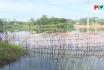 Nuôi trồng thủy sản trong mùa mưa lũ