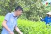 Phân bón Supe Lâm Thao - Người bạn của nhà nông