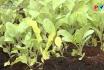 Phát triển nông nghiệp hữu cơ