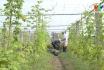 Phim tài liệu: Về làng
