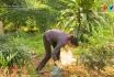 Phụ nữ vùng cao chung tay bảo vệ môi trường