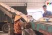 Công ty CP SUPE Lâm Thao đẩy mạnh sản xuất kinh doanh