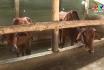 Quy định mới về xử phạt vi phạm xử lý chất thải trong chăn nuôi