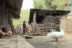 Sắc màu Tây Bắc - Trò chơi ném Pao của người H' Mông
