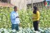 Sản phẩm từ làng: Làng nghề rau an toàn Văn Phú