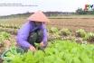 Sử dụng thuốc bảo vệ thực vật an toàn và hiệu quả trên cây rau