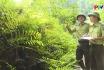Tăng cường các biện pháp cấp bách phòng cháy chữa cháy rừng