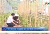 Đẩy mạnh ứng dụng sản xuất nông nghiệp công nghệ cao