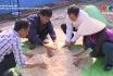 Ủ phân hữu cơ bằng phương pháp lên men hiếu khí