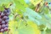 Vườn trái cây Hùng Lô
