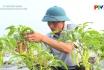 Xây dựng nông thôn mới - Hiệu quả chiến dịch cơ cấu cây trồng