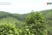Bảo vệ rừng phòng hộ