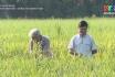 Dồn đổi ruộng đất - Bài học từ sự đồng thuận