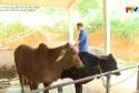 Biogas góp phần bảo vệ môi trường
