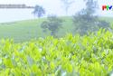 Cơ cấu hóa trong sản xuất nông nghiệp ở miền núi
