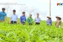 Ứng dụng khoa học kỹ thuật trong trồng trọt