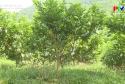 Nông thôn mới Phú Thọ - Đẩy mạnh phát triển kinh tế trang trại