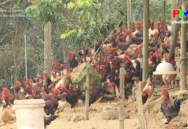 An toàn sinh học trong chăn nuôi