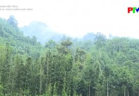 Bảo vệ và phòng chống cháy rừng