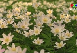 Câu hỏi vì sao - Tìm hiểu về các loài hoa mùa Xuân