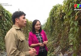 Nông sản an toàn - Cây cho củ trên đất đồi